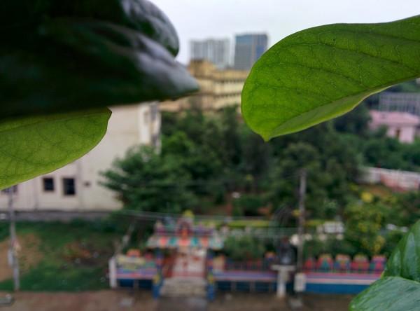udayarumilli_garden_1