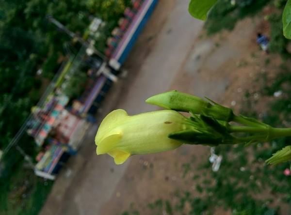 udayarumilli_garden_13