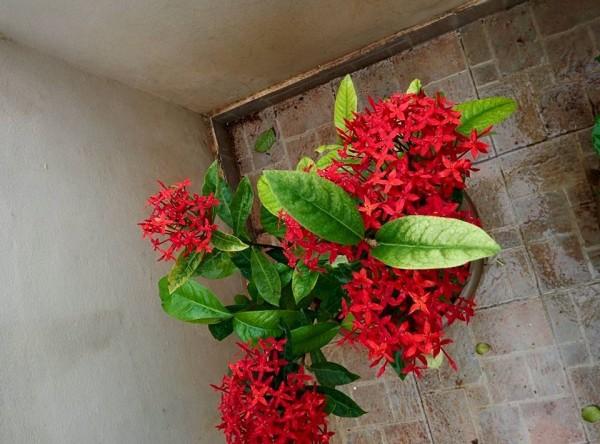 udayarumilli_garden_21