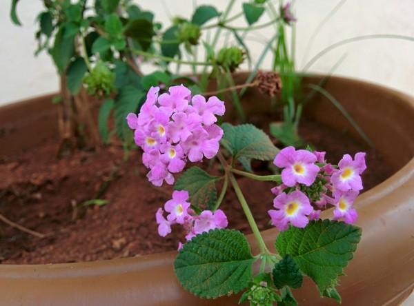 udayarumilli_garden_31