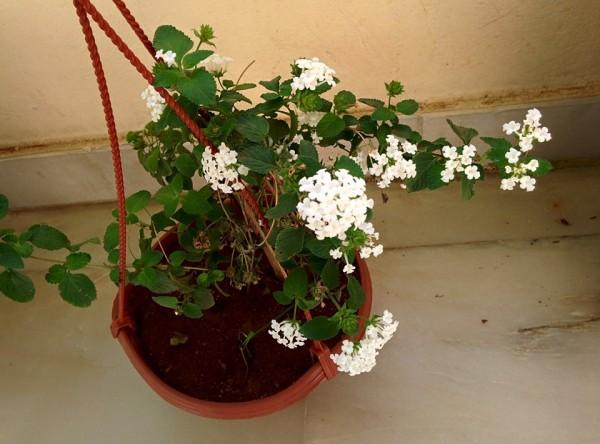 udayarumilli_garden_33