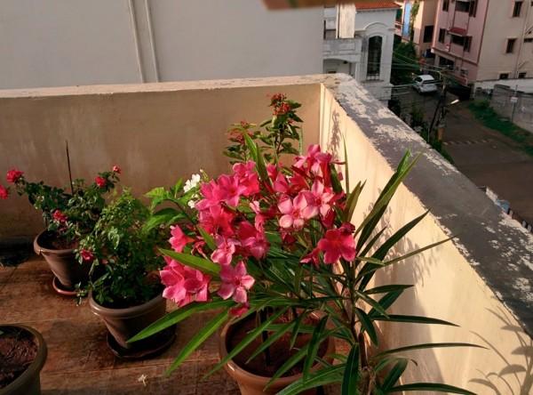 udayarumilli_garden_36