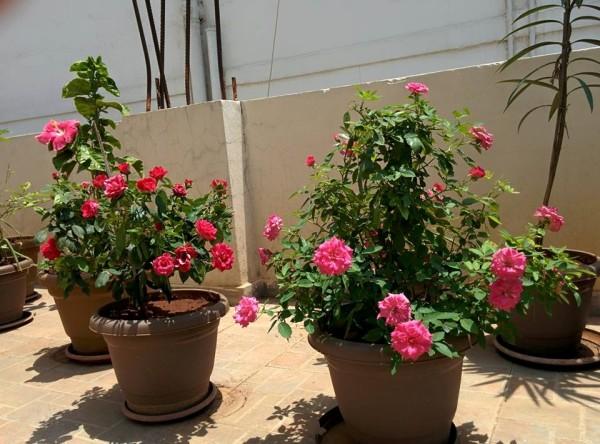 udayarumilli_garden_40
