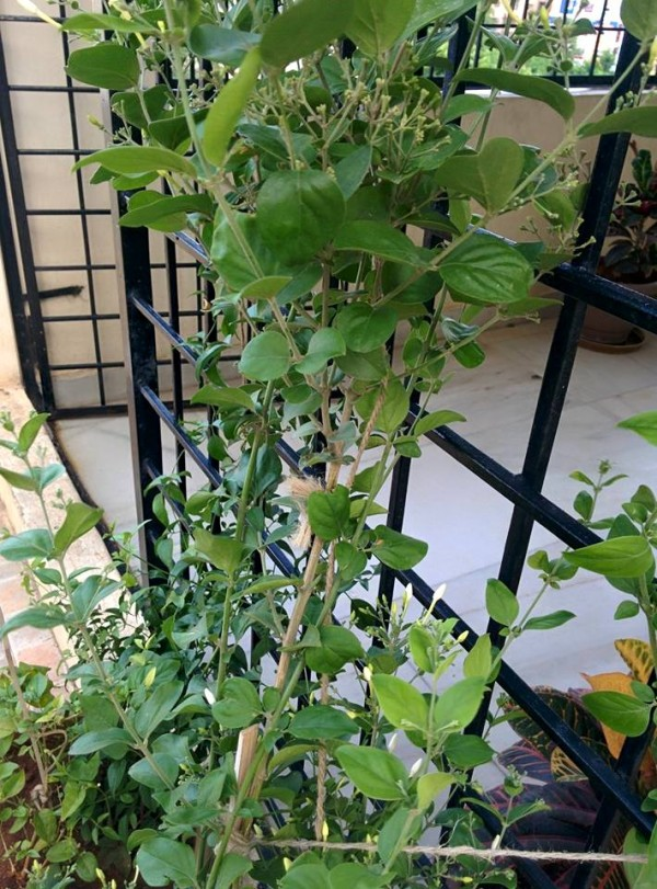 udayarumilli_garden_45