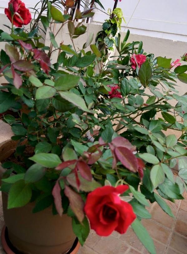 udayarumilli_garden_49