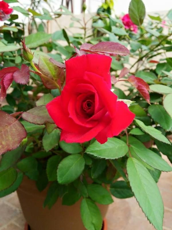 udayarumilli_garden_51