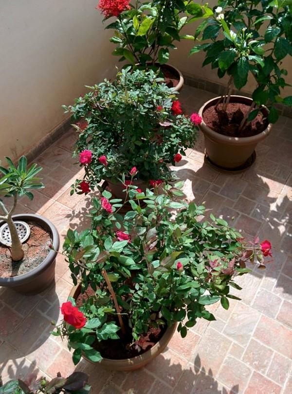 udayarumilli_garden_53