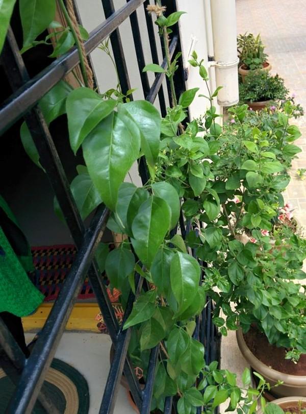 udayarumilli_garden_55