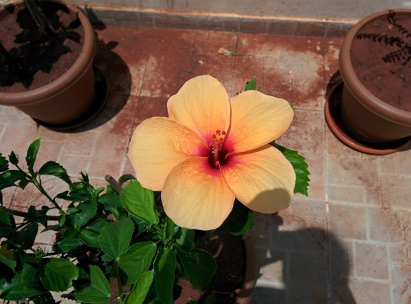 udayarumilli_garden_7