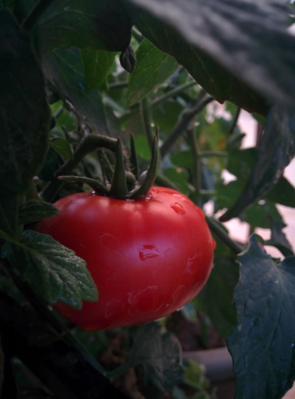 udayarumilli_photography_Garden_5