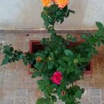 My Garden – 4