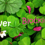 SQL Server Blocking Report